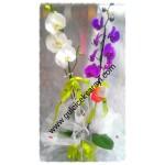 2'Li Beyaz-Lila Orkide